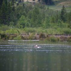 Submerged - Photo by Hilda Jensen