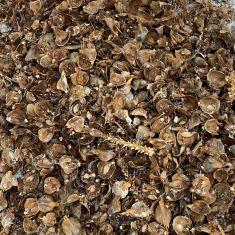 Pine cone litter