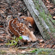 New born fawn Photo by Larry Halverson